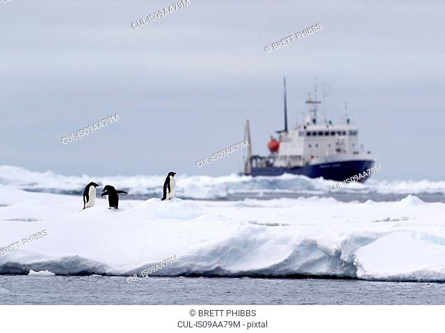 Adelie Penguins on ice floe, ship in distance in the southern ocean, 180 miles north of East Antarctica, Antarctica
