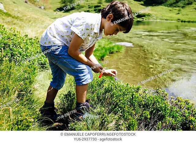 baby collects blueberries. Alpe Devero, Piemonte, Italy