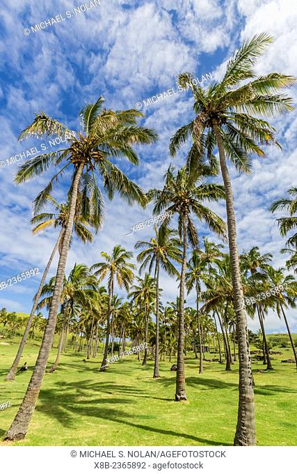 Palm trees on the beach at Anakena on Easter Island, Isla de Pascua, Rapa Nui, Chile
