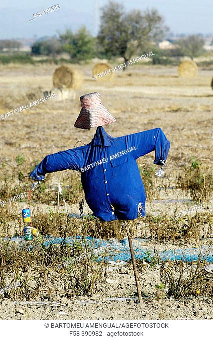 Scarecrow with blue shirt. Straw bales at the rear. Majorca. Balearic Islands. Spain