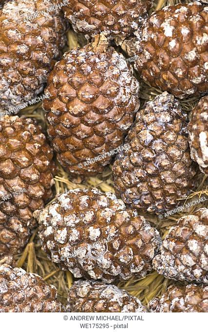 Closed unripened Pine cones on sale at Campo de Fiori market, Rome, Italy
