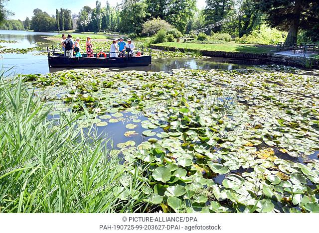 23 July 2019, Saxony-Anhalt, Wörlitz: In Wörlitzer Park there is a ferry between water lilies. The Wörlitz Park was created by Prince Leopold III Friedrich...