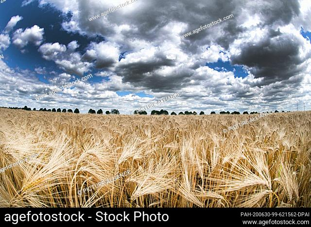 30 June 2020, North Rhine-Westphalia, Pulheim: Clouds pass over a grain field near Pulheim. On Tuesday, with often many clouds