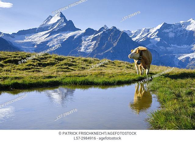 Bachalpsee, Bernes Oberland, Switzerland