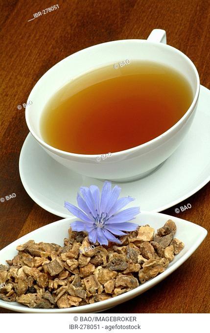 Wild Chicory tea, Cichorium intybus, Cicoria selvatica