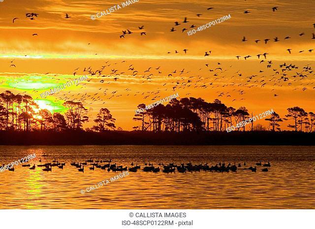 Sunset at Chincoteague National Wildlife Refuge