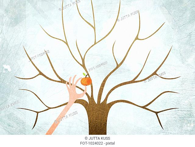 A hand picking the last apple from a bare tree