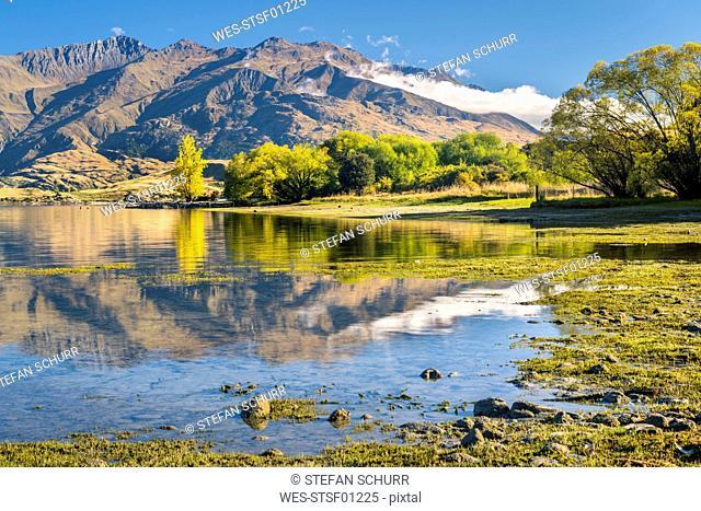 New Zealand, South Island, Gledhu Bay at Lake Wanaka