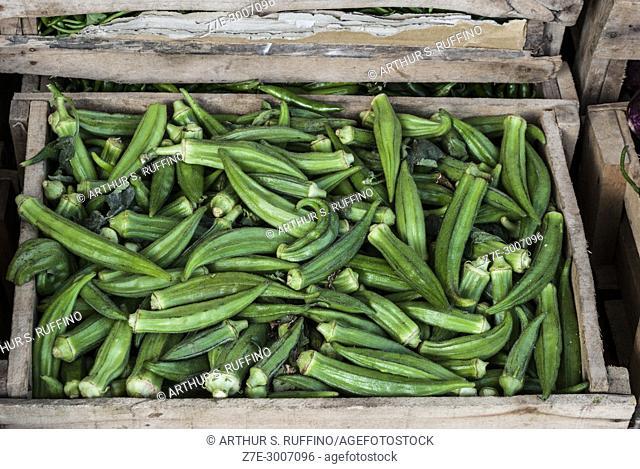 Okra (Abelmoschus esculentus), produce in Fujairah market, Fujairah, United Arab Emirates
