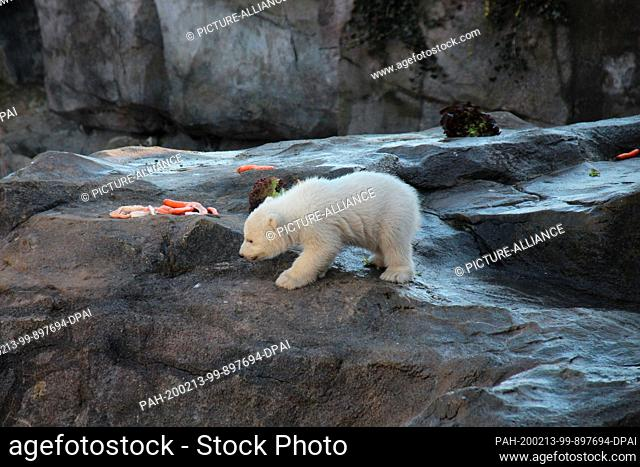 13 February 2020, Austria, Wien: The baby polar bear, which does not yet have a name and whose sex has not yet been determined