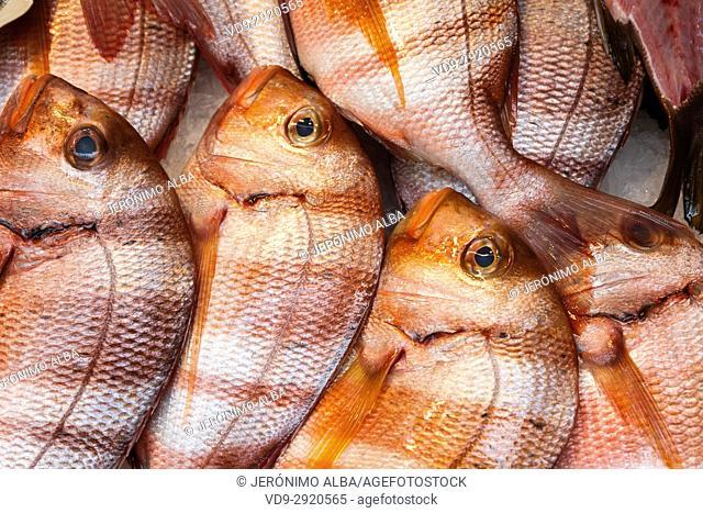 Fresh fish, Atarazanas market, Málaga. Costa del Sol. Andalusia, Southern Spain Europe