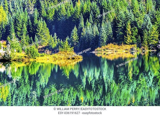 Yellow Green Autumn Reflection Abstract Background Gold. Lake Wenatchess National Forest. Snoqualme Pass. Washington