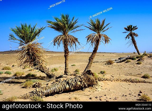 L'oasis Sacrée a small oasis in the Moroccan Sahara Desert