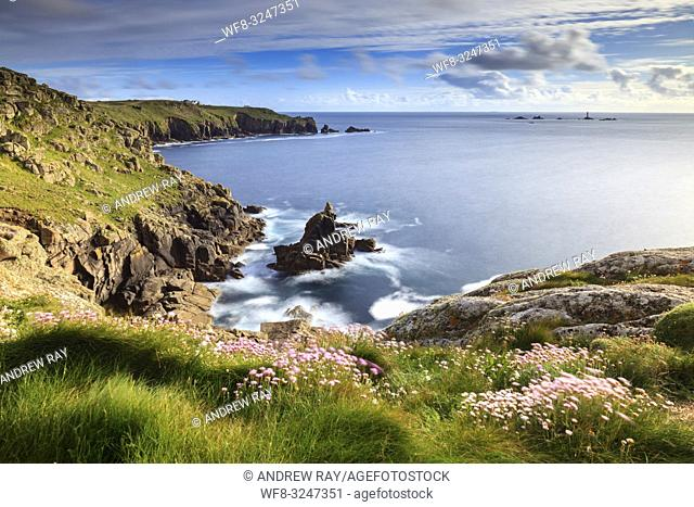 Sea thrift on Mayon Cliff, near Sennen Cove in Cornwall, captured in mid May with Land's End and the Longship Lighthouse in the distance