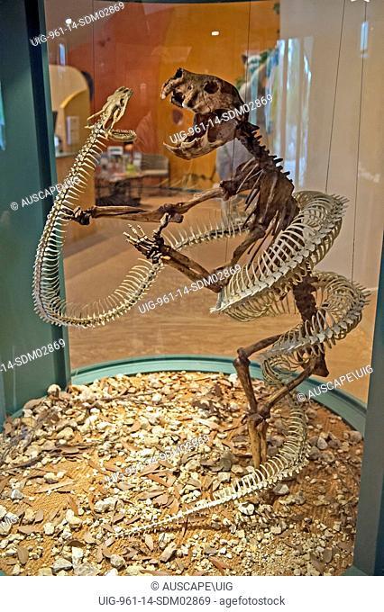 An extinct snake