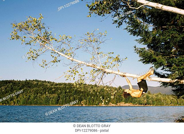A young man hanging on to a tree branch leaning out over a lake; Waterbury, Vermont, United States of America