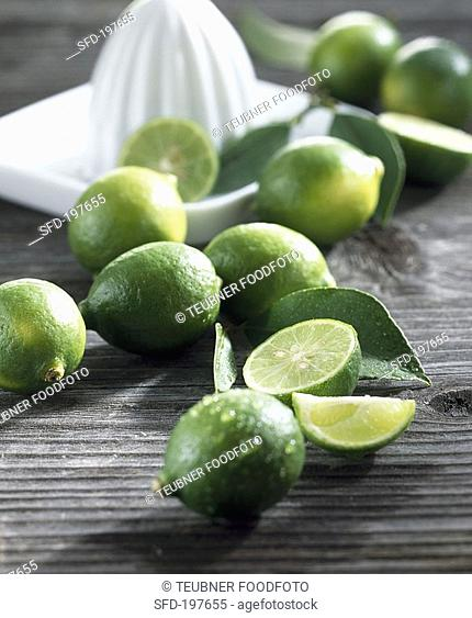 Limequat cross: kumquat x lime