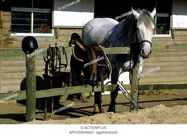 Horse with riders equipment on a fence