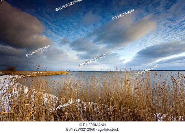 winter scenery at the East Sea, cumulus and cirrocumulus clouds over a reed belt with snow in morning light, Germany, Mecklenburg-Western Pomerania