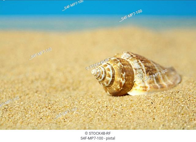 House from a water snail lying in the sand