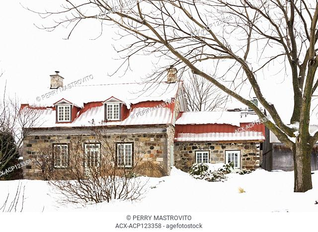 Old 1838 Canadiana assorted coloured fieldstone cottage style home with red sheet metal roof framed by a Juglans - Walnut tree in winter, Quebec, Canada