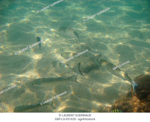 Underwater pictures, Pisces, Ilha Grande, Rio de Janeiro, Brazil
