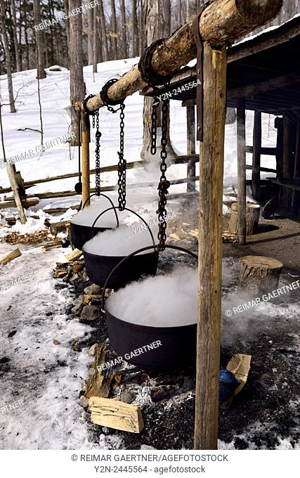 Three cast iron evaporator pots over open fire to produce maple syrup at a sugar shack