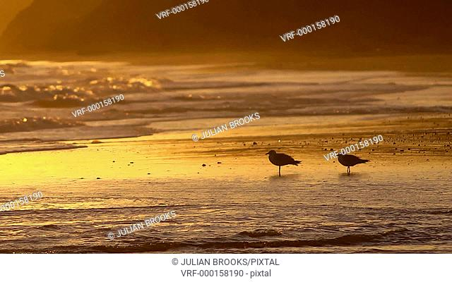two seagulls on a sandy beach at sunset