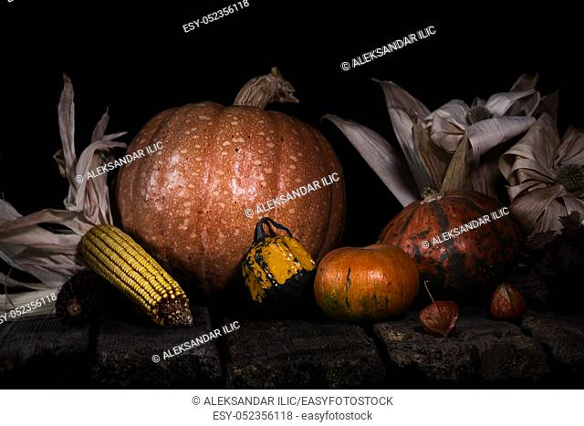 Autumn Pumpkins and Corn On a Rustic Wooden Surface. Thanksgiving Day Concept