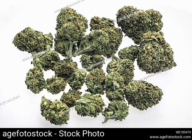 US medical marijuana cannabis buds closeup on white studio background in california