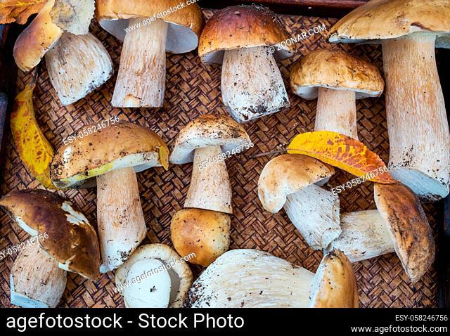 Autumnal mushrooms on wooden tray