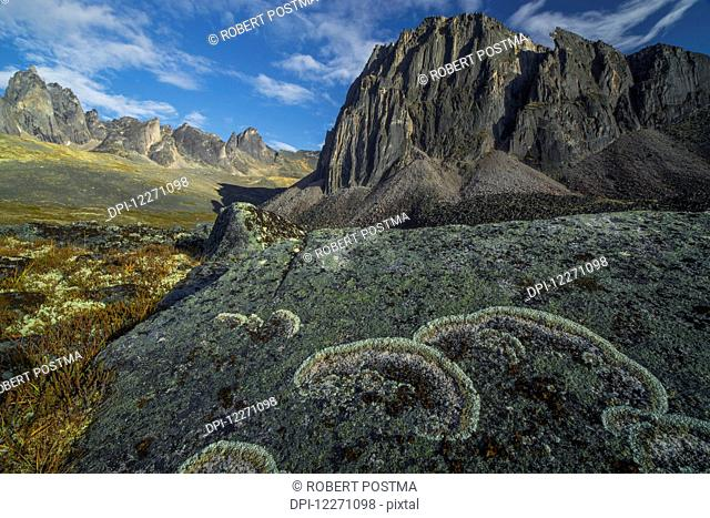 Lichen covers a rock in unique patterns while large granite peaks rise above the tundra of Tombstone territorial Park; Yukon, Canada