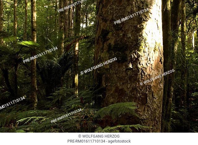 Coromandel, New Zealand, Oceania