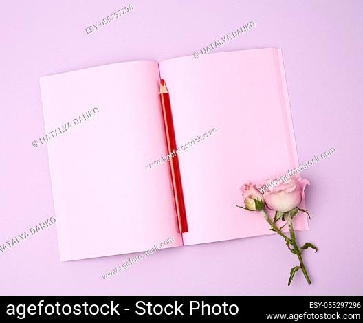 open notebook with pink sheets and pink rose on a purple background, flat lay
