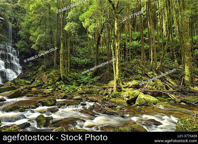 Nelson Falls. Franklin-Gordon Wild Rivers National Park, Tasmania (Australia)