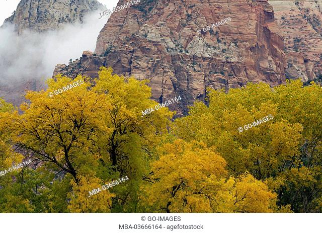 Zion national park, the USA