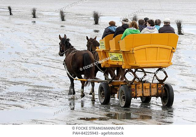 A mudflat carriage drives through the mudflat between Cuxhaven and the island of Neuwerk, Germany, 20 September 2016. The island at the mouth of the river Elbe...