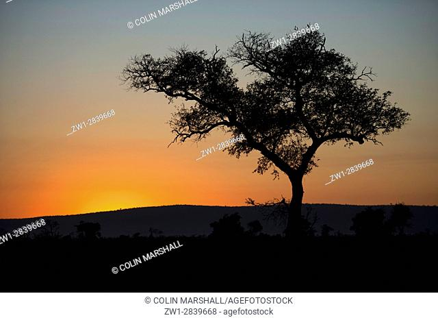 Tree silhouette at dusk, Kruger National Park, Transvaal, South Africa