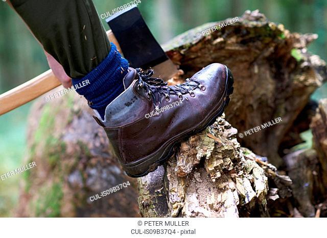 Cropped view of lumberjack's foot raised on tree stump