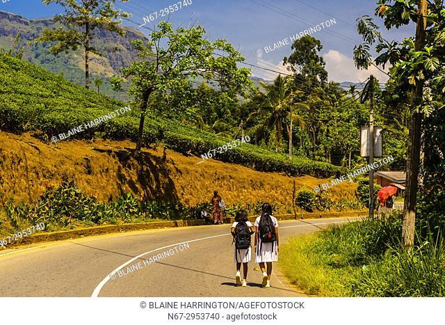 School girls walking down road (with tea gardens above), Pussellawa, Central Province, Sri Lanka