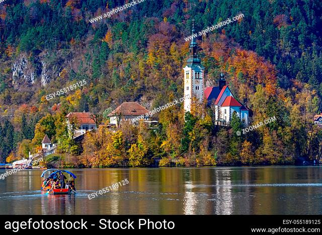 Bled, Slovenia - October 31, 2018: Panoramic view of Lake Bled with Church and Pletna boat, Slovenia and autumn colorful trees background