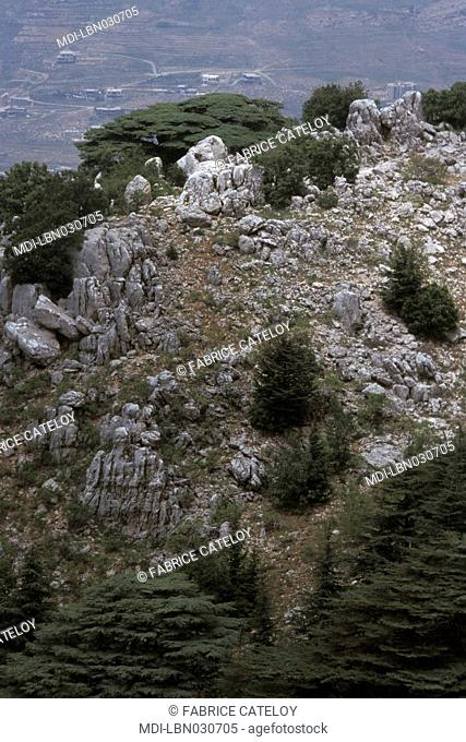 Lebanon - Chouf - Massaer el Chouf reserve