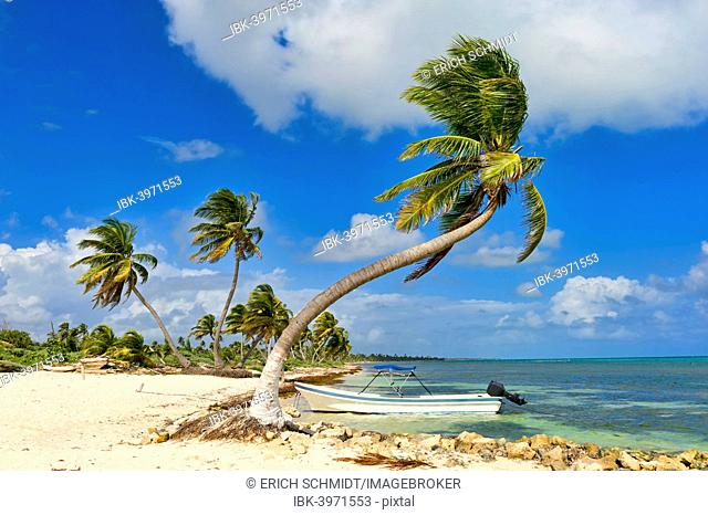 Palm trees and a boat on the beach, Costa Maya, Quintana Roo, Mexico