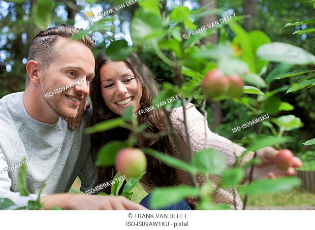 Couple picking apples from garden