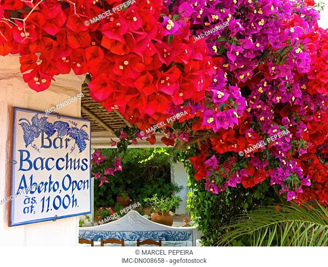 Portugal, Algarve, near Lagoa, flowered terrace