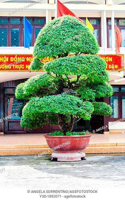 Beautiful bonsai plant, Quy Nhon, Vietnam