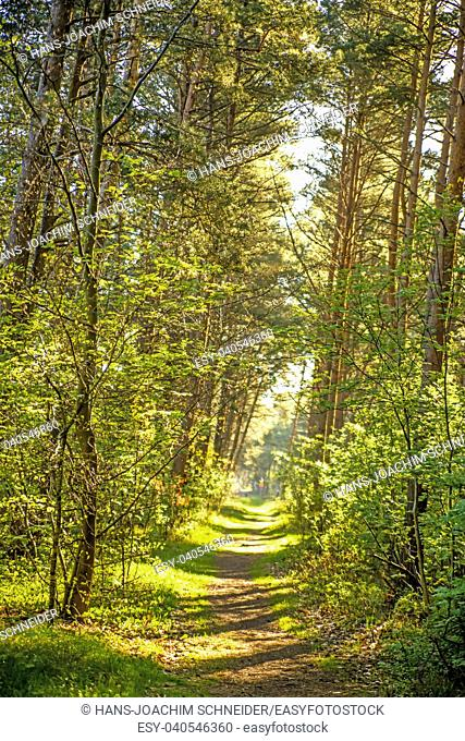 Forest in spring in soft, sunny light in Poland