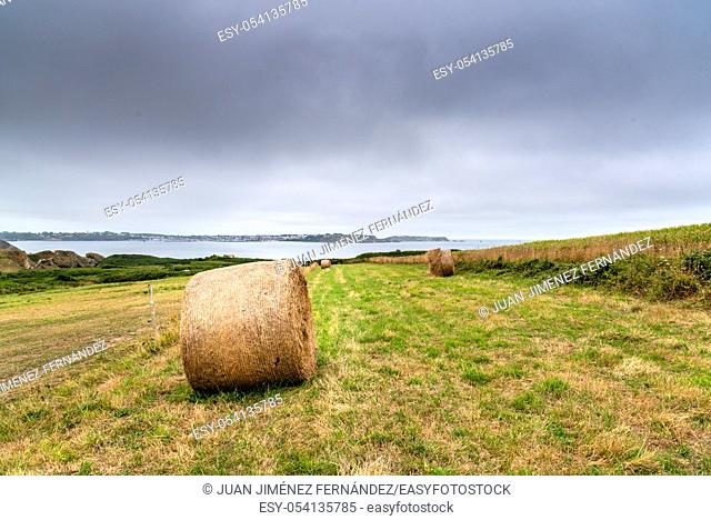 Field with hay bales after harvest in summer against cloudy sky. Copy space