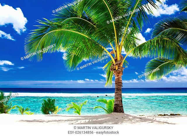 A single palm tree overlooking tropical beach on Roratonga, Cook Islands