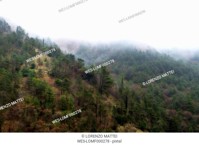 Italy, Umbria, Gubbio, Forest in the Apennines in winter